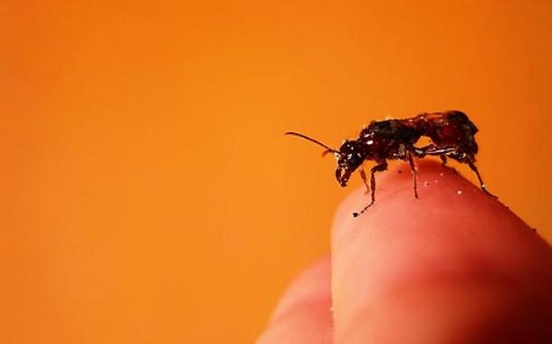Medidas preventivas para o controle de formigas