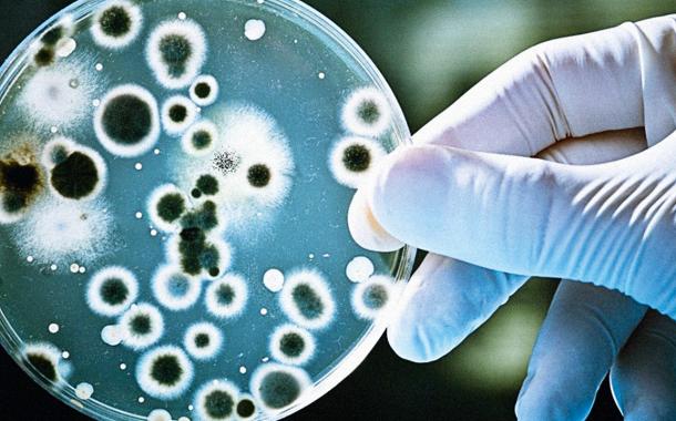 Espanha cria rede para combater a resistência antimicrobiana