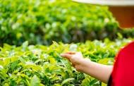 Estudo análisa os resíduos agrotóxicos nos alimentos vegetais