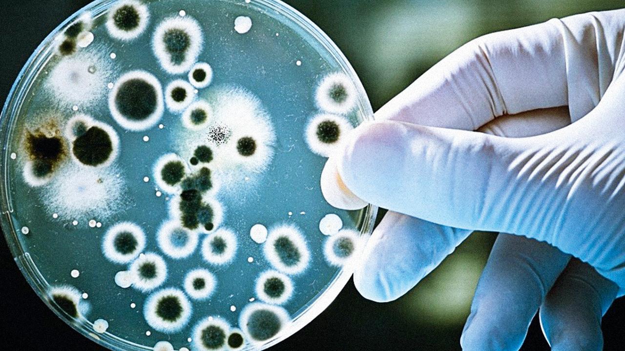 Superbactérias: de onde vêm, como vivem e se reproduzem