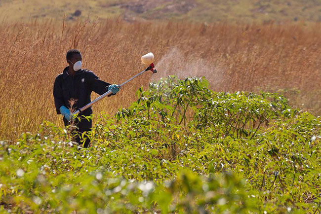 Nova metodologia define reavaliação de agrotóxicos