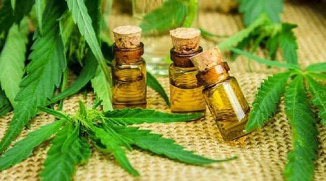Primeiro Produto à base de Cannabis é aprovado pela ANVISA